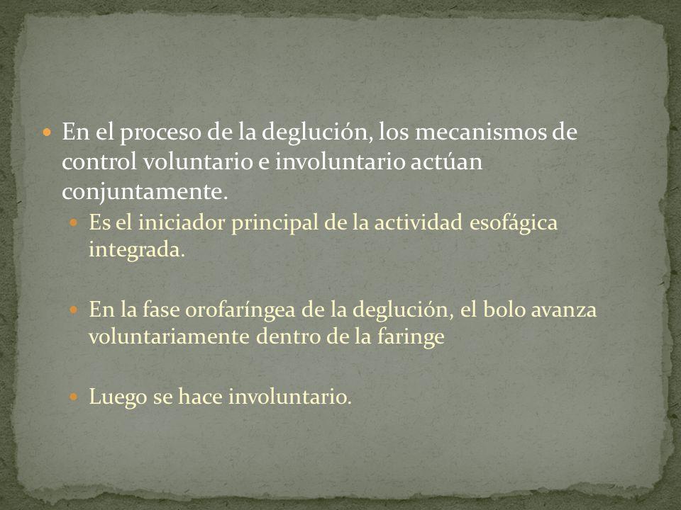En el proceso de la deglución, los mecanismos de control voluntario e involuntario actúan conjuntamente. Es el iniciador principal de la actividad eso
