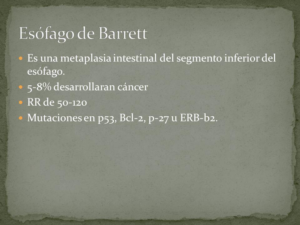 Es una metaplasia intestinal del segmento inferior del esófago. 5-8% desarrollaran cáncer RR de 50-120 Mutaciones en p53, Bcl-2, p-27 u ERB-b2.