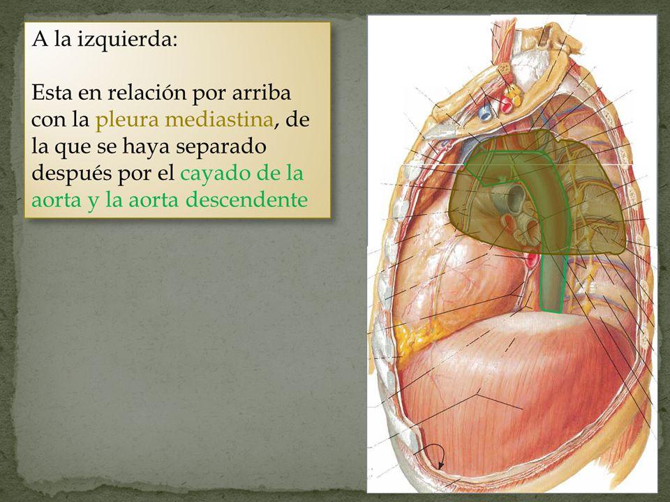 Laringoscopia Parálisis de las cuerdas vocales por afección del nervio.