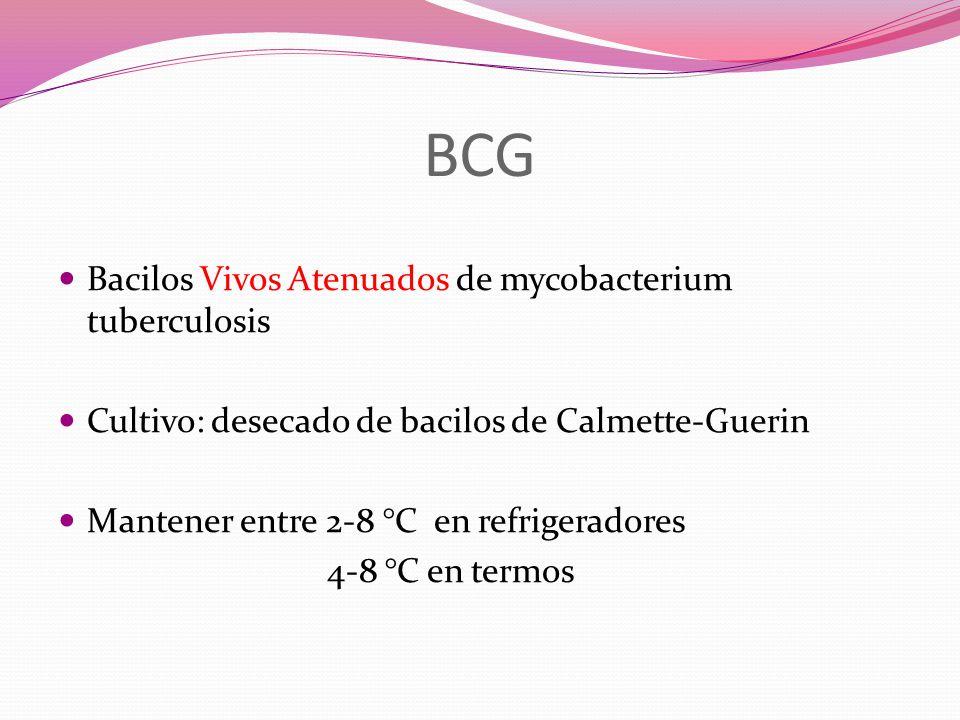 BCG Bacilos Vivos Atenuados de mycobacterium tuberculosis Cultivo: desecado de bacilos de Calmette-Guerin Mantener entre 2-8 °C en refrigeradores 4-8 °C en termos