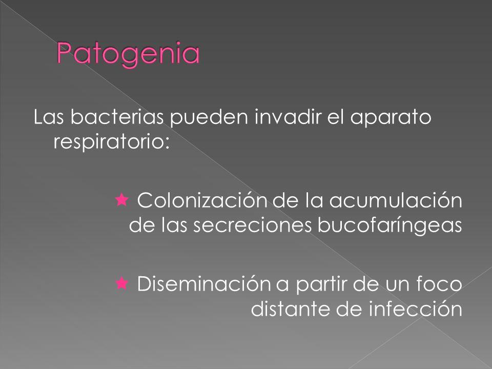 Las bacterias pueden invadir el aparato respiratorio: Colonización de la acumulación de las secreciones bucofaríngeas Diseminación a partir de un foco distante de infección