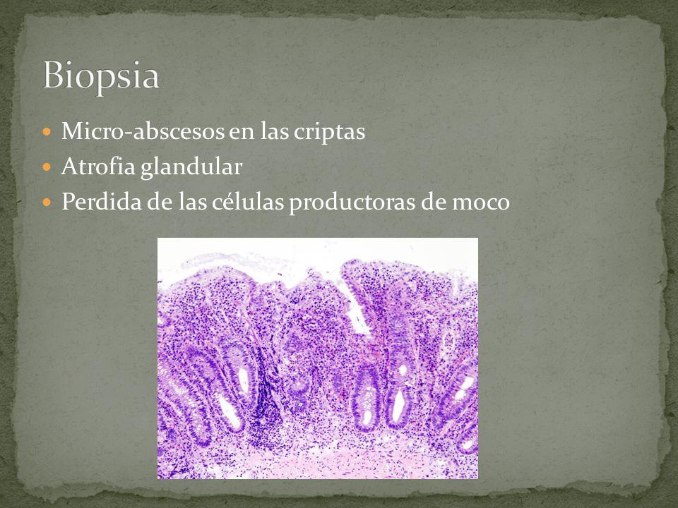Micro-abscesos en las criptas Atrofia glandular Perdida de las células productoras de moco
