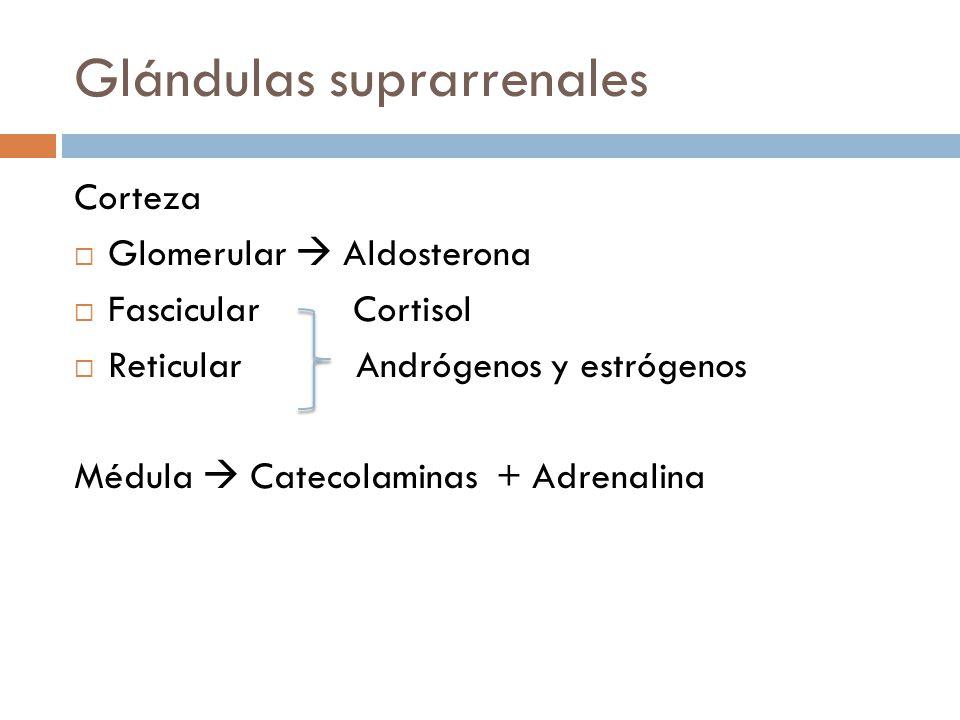 Glándulas suprarrenales Corteza Glomerular Aldosterona Fascicular Cortisol Reticular Andrógenos y estrógenos Médula Catecolaminas + Adrenalina