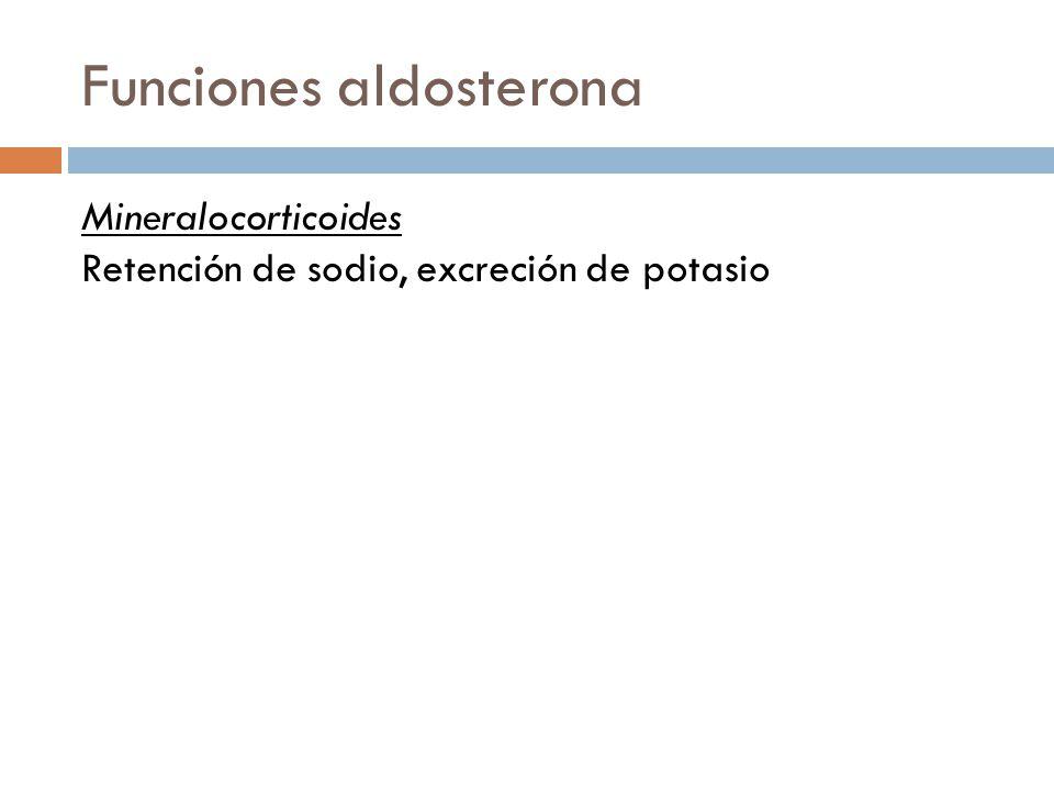 Funciones Catecolaminas Producen un aumento de la glucemia (producción de glucosa hepática).