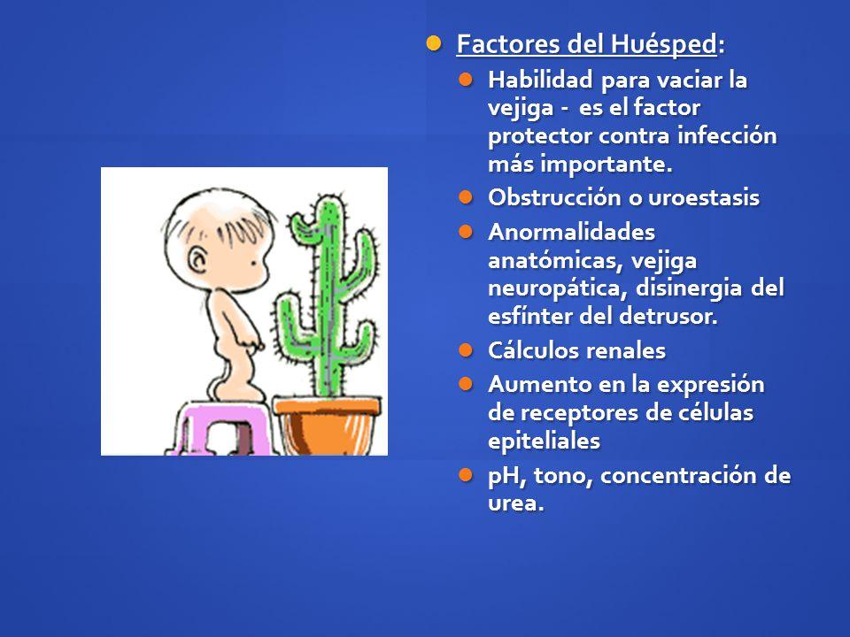 Factores del Huésped: Factores del Huésped: Habilidad para vaciar la vejiga - es el factor protector contra infección más importante. Habilidad para v