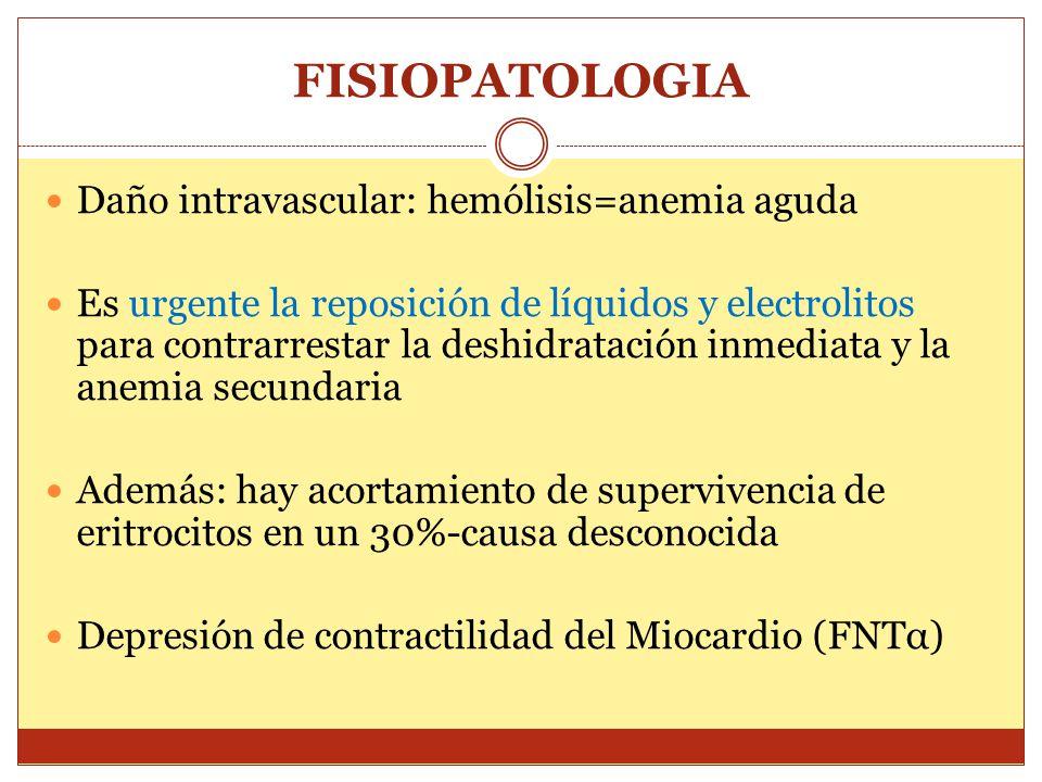FISIOPATOLOGIA Daño intravascular: hemólisis=anemia aguda Es urgente la reposición de líquidos y electrolitos para contrarrestar la deshidratación inm