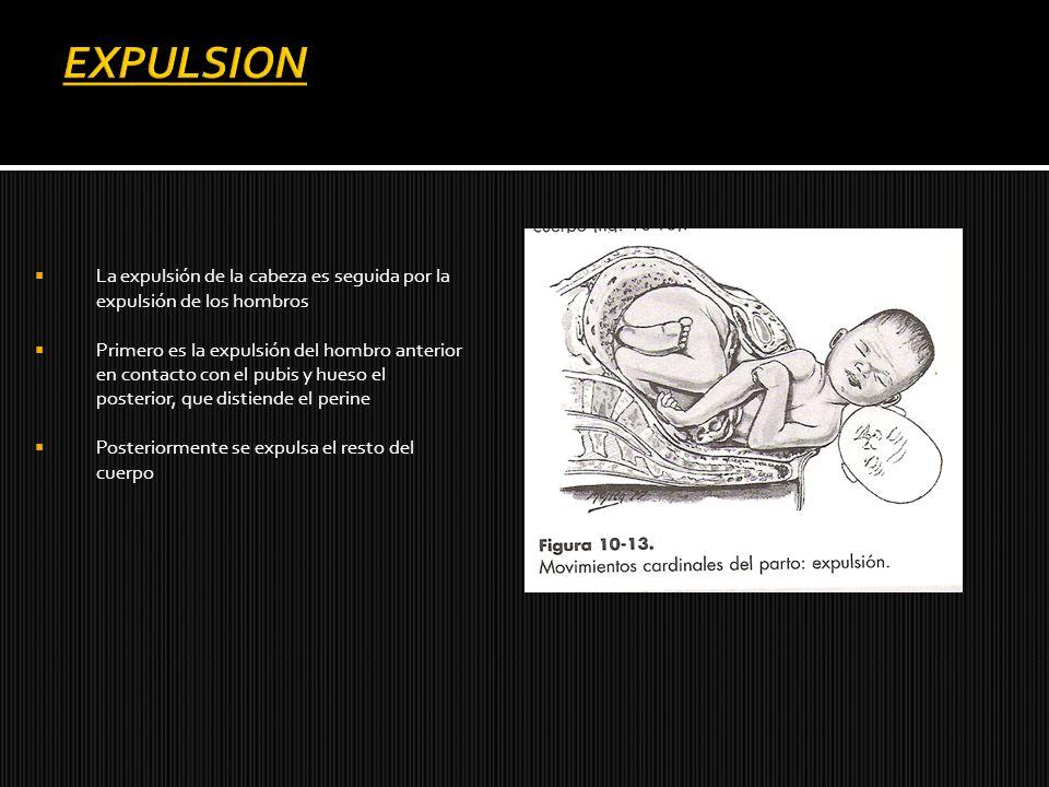 La expulsión de la cabeza es seguida por la expulsión de los hombros Primero es la expulsión del hombro anterior en contacto con el pubis y hueso el p
