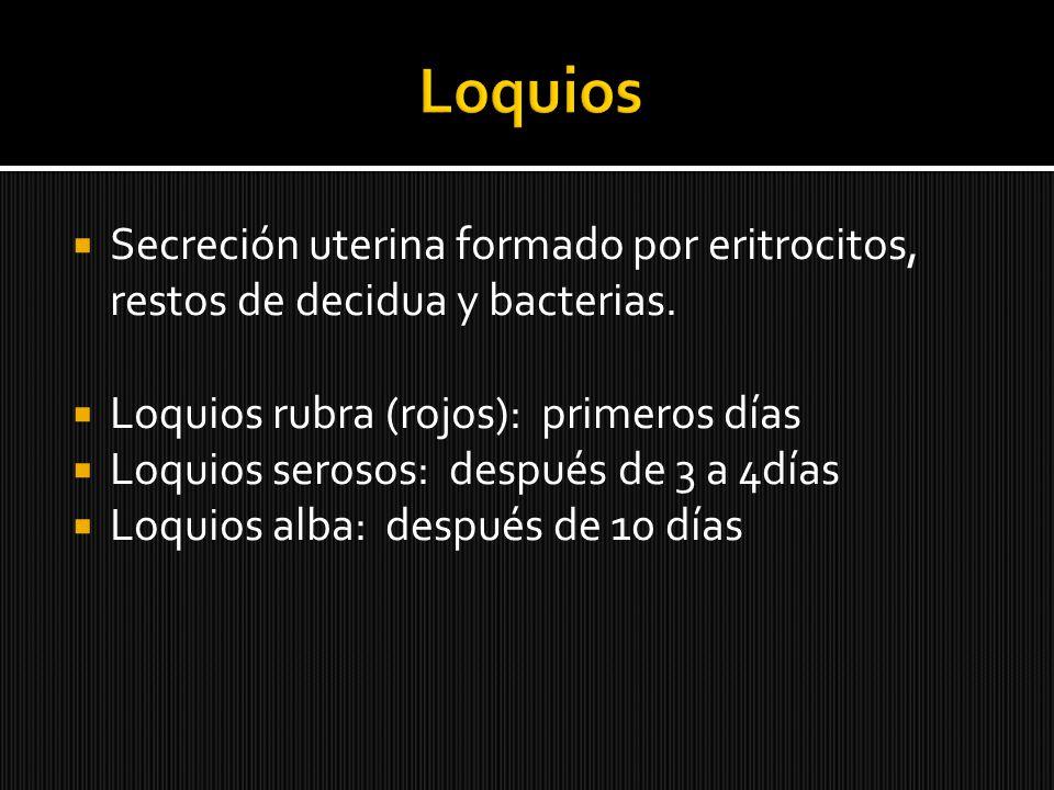 Secreción uterina formado por eritrocitos, restos de decidua y bacterias. Loquios rubra (rojos): primeros días Loquios serosos: después de 3 a 4días L