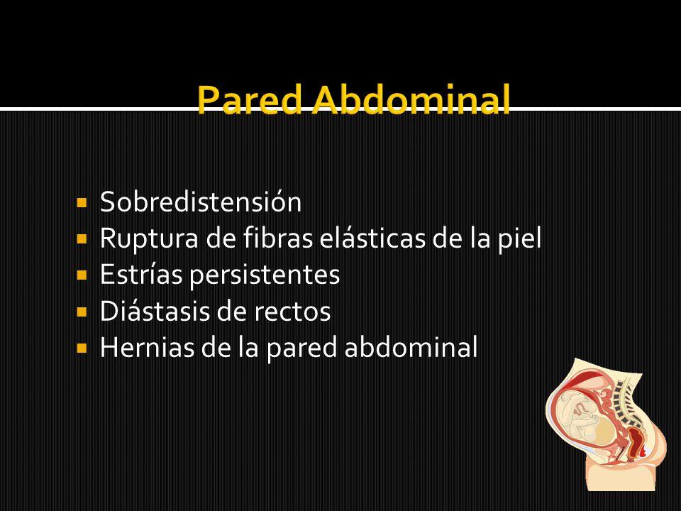 Sobredistensión Ruptura de fibras elásticas de la piel Estrías persistentes Diástasis de rectos Hernias de la pared abdominal