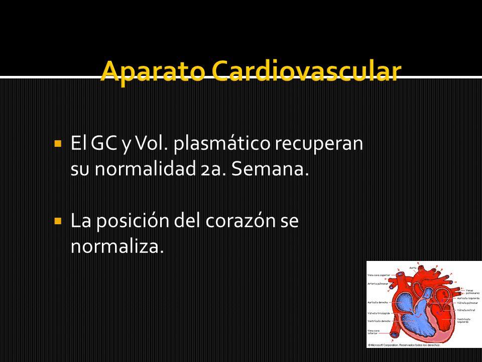 El GC y Vol. plasmático recuperan su normalidad 2a. Semana. La posición del corazón se normaliza.