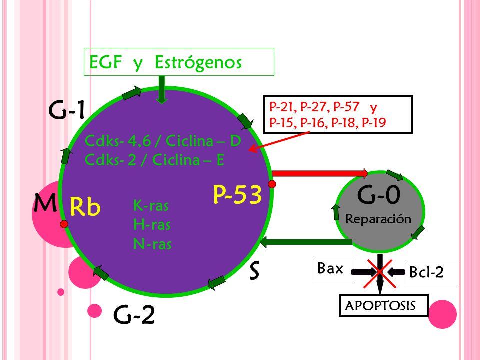 G-2 S M G-1 G-0P-53 Rb Cdks- 4,6 / Ciclina – D Cdks- 2 / Ciclina – E APOPTOSIS P-21, P-27, P-57 y P-15, P-16, P-18, P-19 Bcl-2 EGF y Estrógenos Bax Reparación K-ras H-ras N-ras