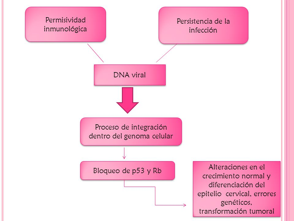 Permisividad inmunológica Persistencia de la infección DNA viral Proceso de integración dentro del genoma celular Bloqueo de p53 y Rb Alteraciones en el crecimiento normal y diferenciación del epitelio cervical, errores genéticos, transformación tumoral