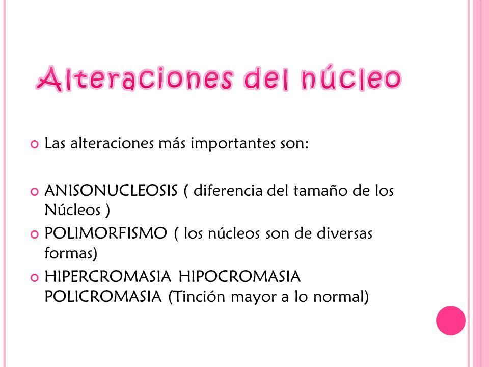 Las alteraciones más importantes son: ANISONUCLEOSIS ( diferencia del tamaño de los Núcleos ) POLIMORFISMO ( los núcleos son de diversas formas) HIPERCROMASIA HIPOCROMASIA POLICROMASIA (Tinción mayor a lo normal)