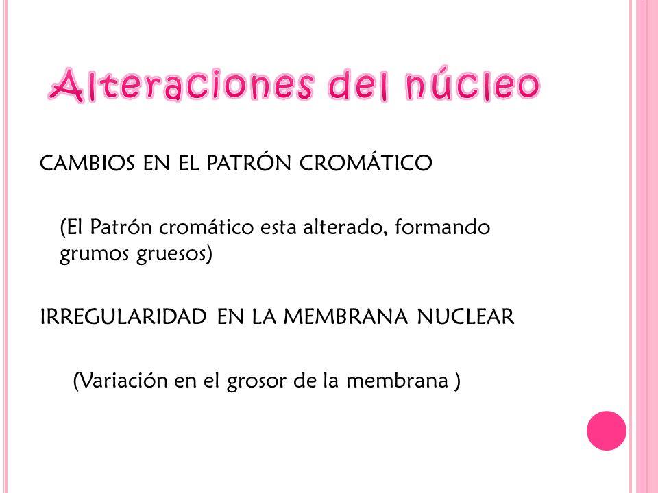 CAMBIOS EN EL PATRÓN CROMÁTICO (El Patrón cromático esta alterado, formando grumos gruesos) IRREGULARIDAD EN LA MEMBRANA NUCLEAR (Variación en el grosor de la membrana )