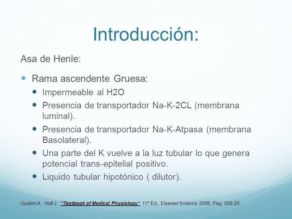 Introducción: Asa de Henle: Rama ascendente Gruesa: Impermeable al H2O Presencia de transportador Na-K-2CL (membrana luminal). Presencia de transporta
