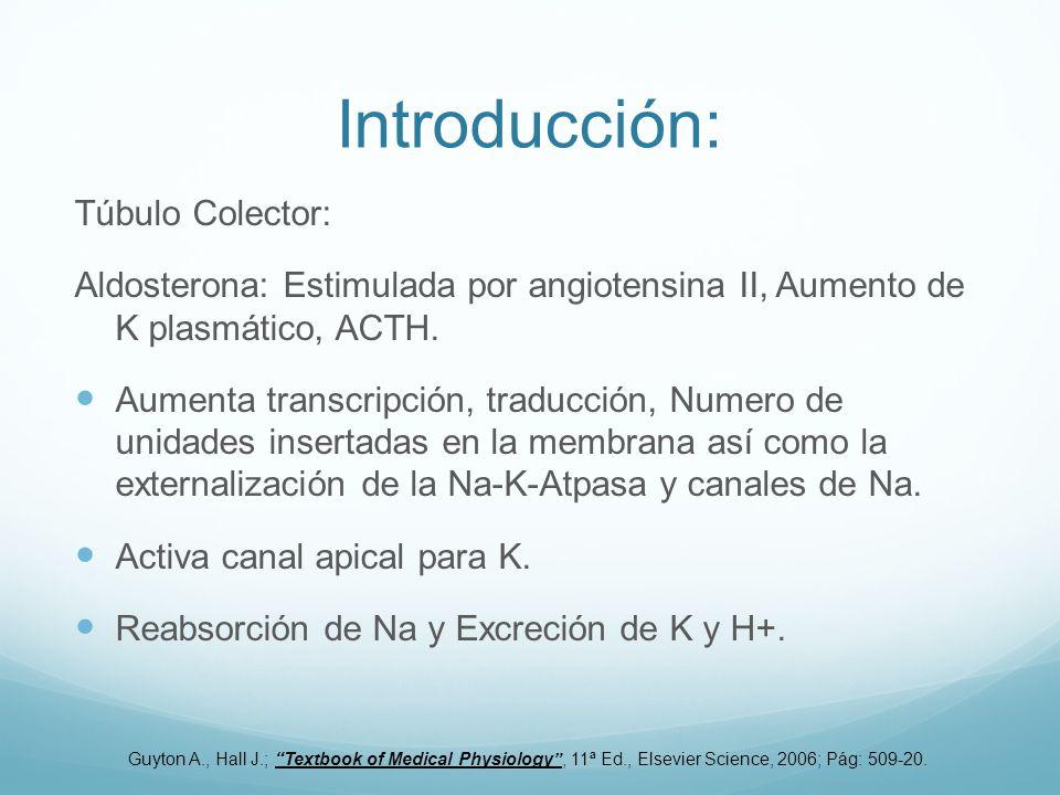 Introducción: Túbulo Colector: Aldosterona: Estimulada por angiotensina II, Aumento de K plasmático, ACTH. Aumenta transcripción, traducción, Numero d