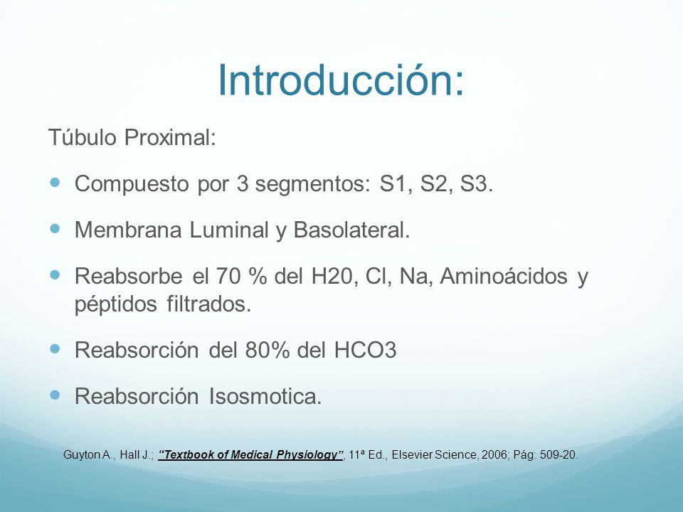 Introducción: Túbulo Proximal: Compuesto por 3 segmentos: S1, S2, S3. Membrana Luminal y Basolateral. Reabsorbe el 70 % del H20, Cl, Na, Aminoácidos y