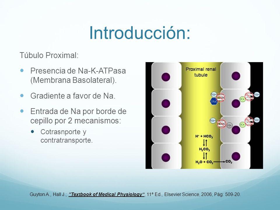 Introducción: Túbulo Proximal: Presencia de Na-K-ATPasa (Membrana Basolateral). Gradiente a favor de Na. Entrada de Na por borde de cepillo por 2 meca