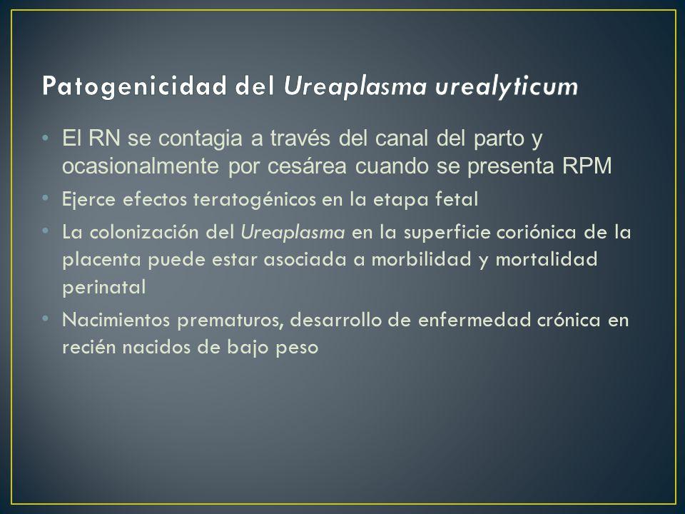 El RN se contagia a través del canal del parto y ocasionalmente por cesárea cuando se presenta RPM Ejerce efectos teratogénicos en la etapa fetal La colonización del Ureaplasma en la superficie coriónica de la placenta puede estar asociada a morbilidad y mortalidad perinatal Nacimientos prematuros, desarrollo de enfermedad crónica en recién nacidos de bajo peso