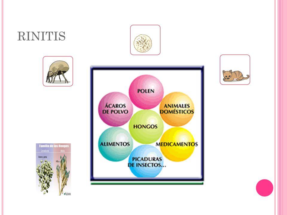 perenne: puede estar causada por ácaros, hongos, epitelios de animales.