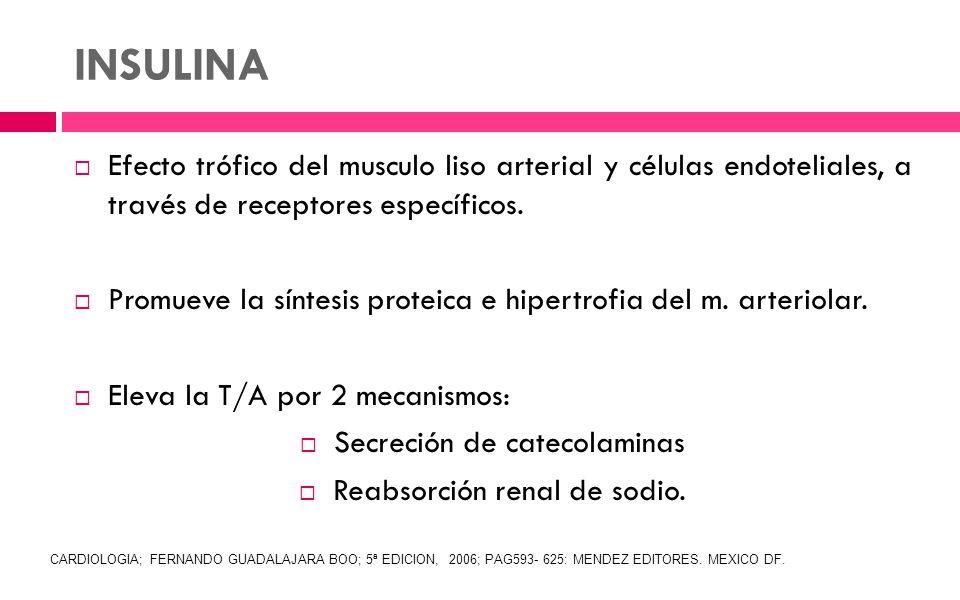 INSULINA Efecto trófico del musculo liso arterial y células endoteliales, a través de receptores específicos. Promueve la síntesis proteica e hipertro