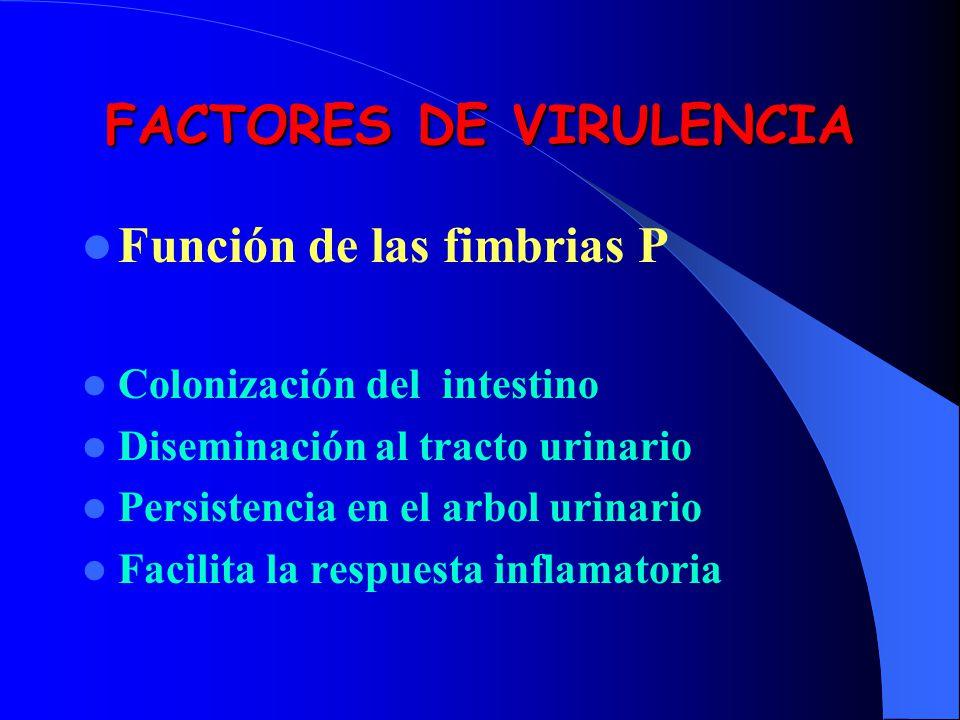 FACTORES DE VIRULENCIA Función de las fimbrias P Colonización del intestino Diseminación al tracto urinario Persistencia en el arbol urinario Facilita