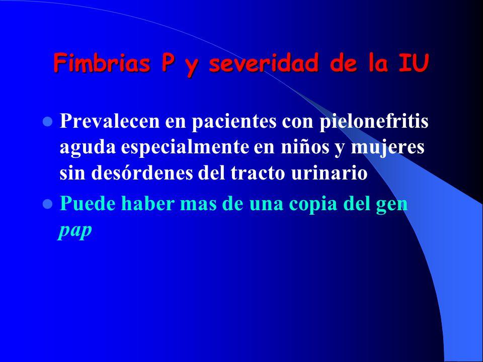 Fimbrias P y severidad de la IU Prevalecen en pacientes con pielonefritis aguda especialmente en niños y mujeres sin desórdenes del tracto urinario Pu