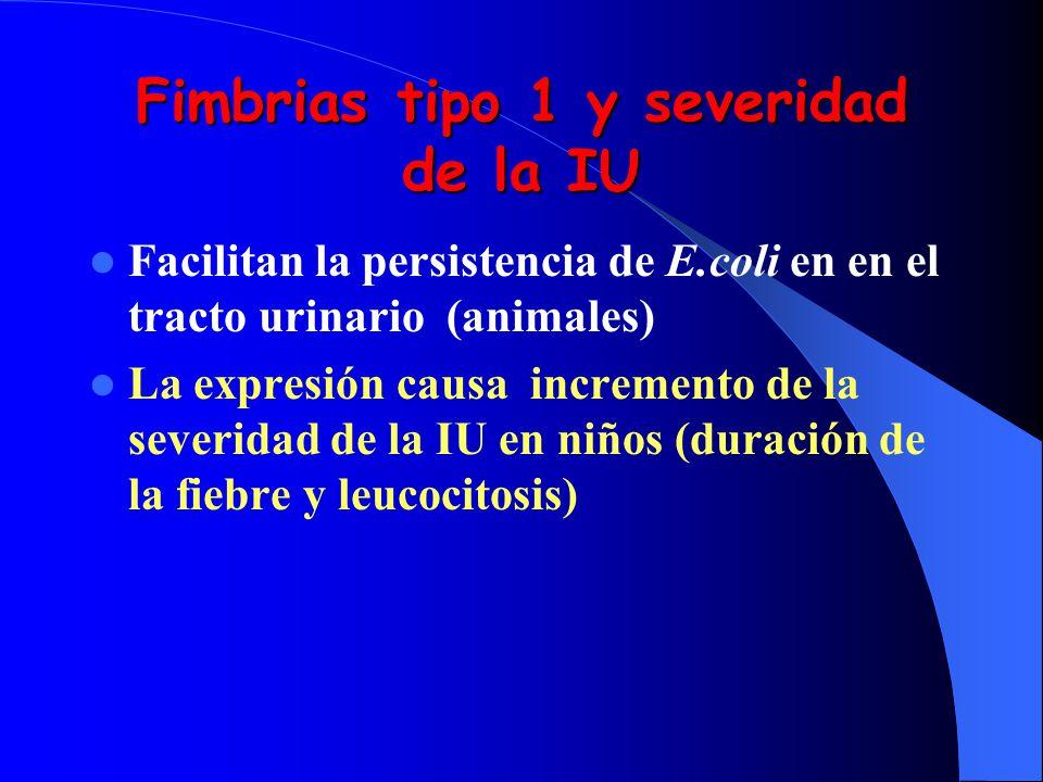 Fimbrias tipo 1 y severidad de la IU Facilitan la persistencia de E.coli en en el tracto urinario (animales) La expresión causa incremento de la sever