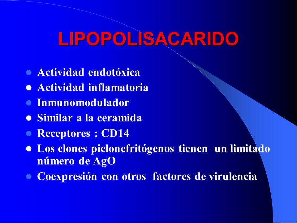LIPOPOLISACARIDO Actividad endotóxica Actividad inflamatoria Inmunomodulador Similar a la ceramida Receptores : CD14 Los clones pielonefritógenos tien
