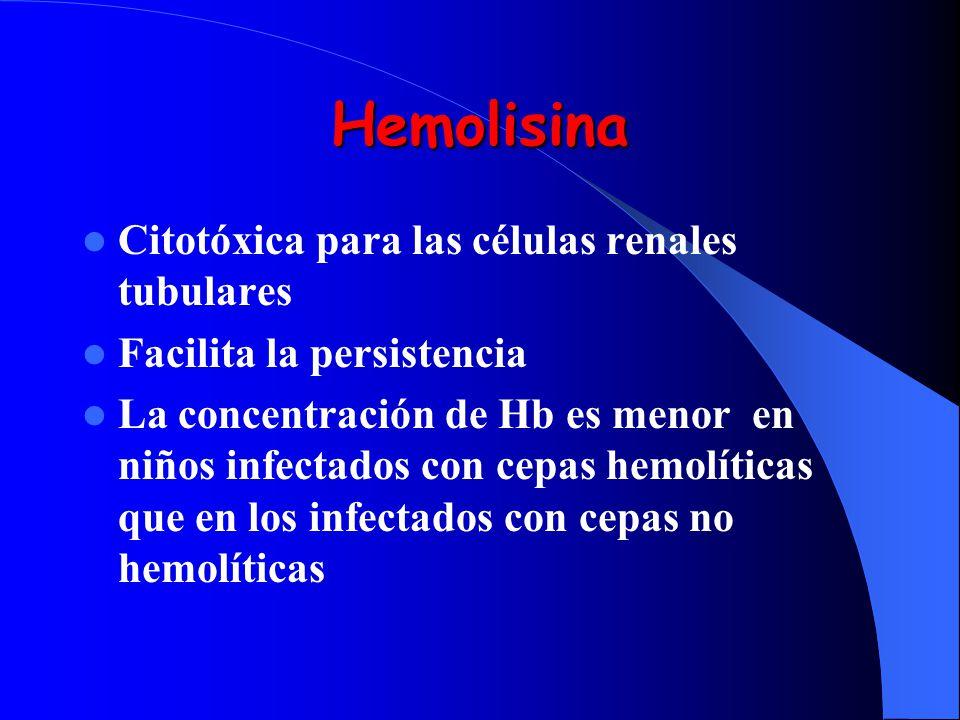 Hemolisina Citotóxica para las células renales tubulares Facilita la persistencia La concentración de Hb es menor en niños infectados con cepas hemolí