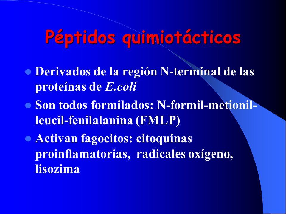 Péptidos quimiotácticos Derivados de la región N-terminal de las proteínas de E.coli Son todos formilados: N-formil-metionil- leucil-fenilalanina (FML