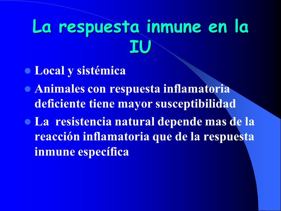 La respuesta inmune en la IU Local y sistémica Animales con respuesta inflamatoria deficiente tiene mayor susceptibilidad La resistencia natural depen