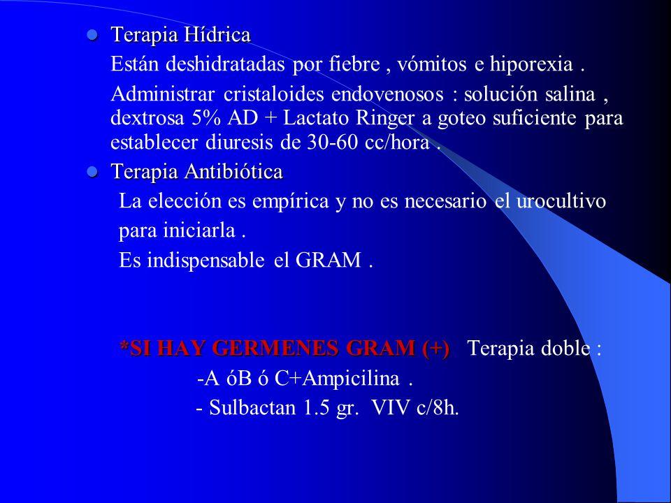 Terapia Hídrica Terapia Hídrica Están deshidratadas por fiebre, vómitos e hiporexia. Administrar cristaloides endovenosos : solución salina, dextrosa