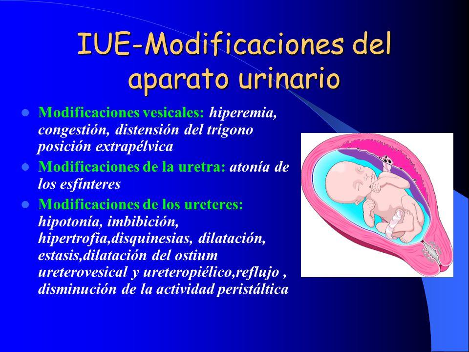 IUE-Modificaciones del aparato urinario Modificaciones vesicales: hiperemia, congestión, distensión del trígono posición extrapélvica Modificaciones d