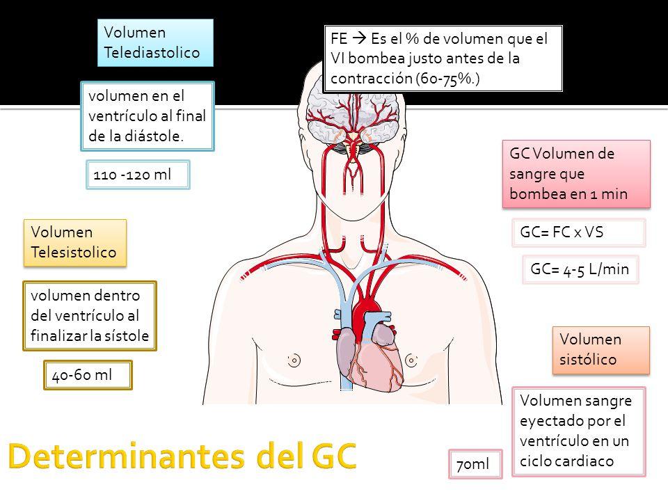 Volumen Telediastolico Volumen Telesistolico volumen en el ventrículo al final de la diástole.