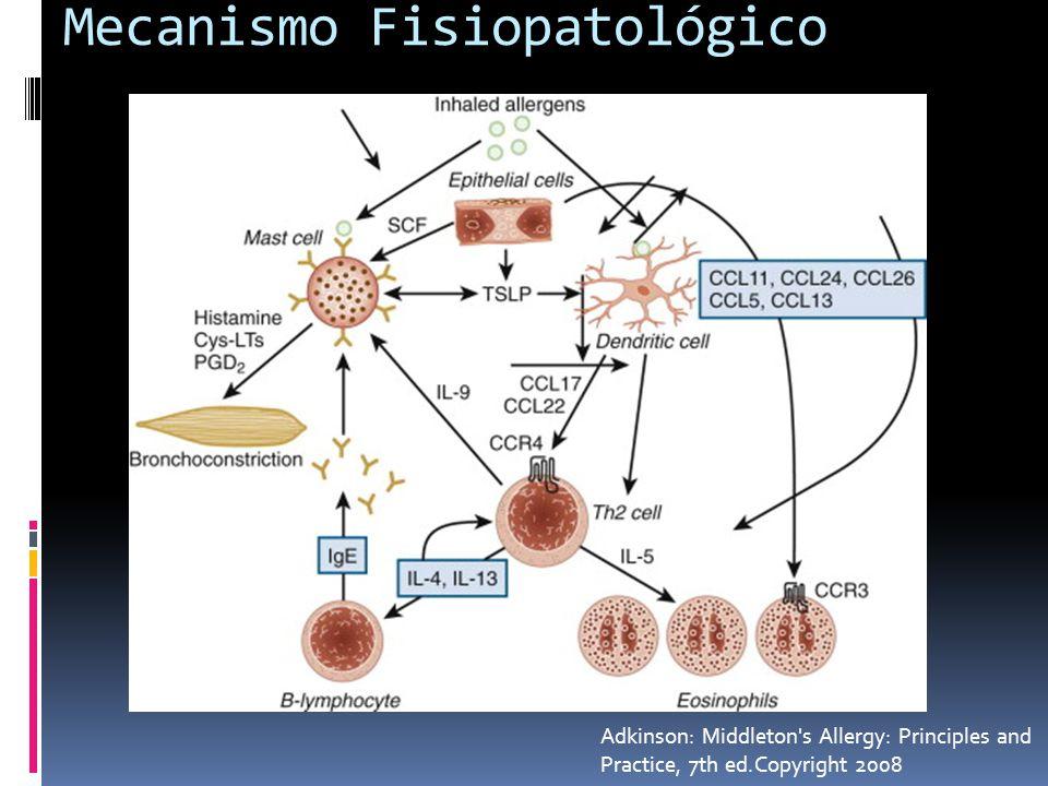 Mecanismo Fisiopatológico Adkinson: Middleton s Allergy: Principles and Practice, 7th ed.Copyright 2008