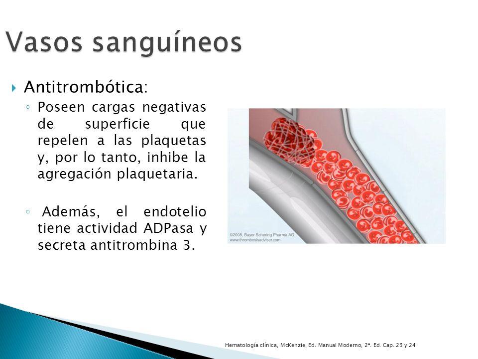 Vasos sanguíneos Antitrombótica: Poseen cargas negativas de superficie que repelen a las plaquetas y, por lo tanto, inhibe la agregación plaquetaria.
