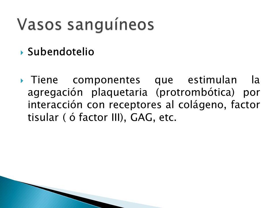 Subendotelio Tiene componentes que estimulan la agregación plaquetaria (protrombótica) por interacción con receptores al colágeno, factor tisular ( ó