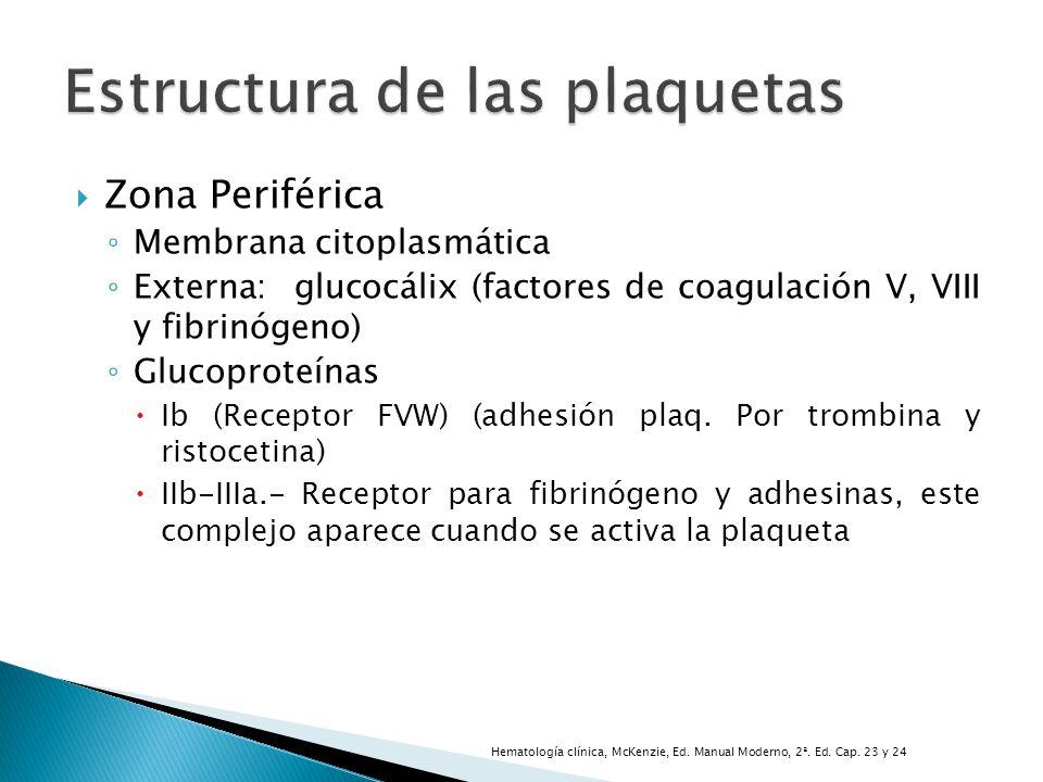 Zona Periférica Membrana citoplasmática Externa: glucocálix (factores de coagulación V, VIII y fibrinógeno) Glucoproteínas Ib (Receptor FVW) (adhesión