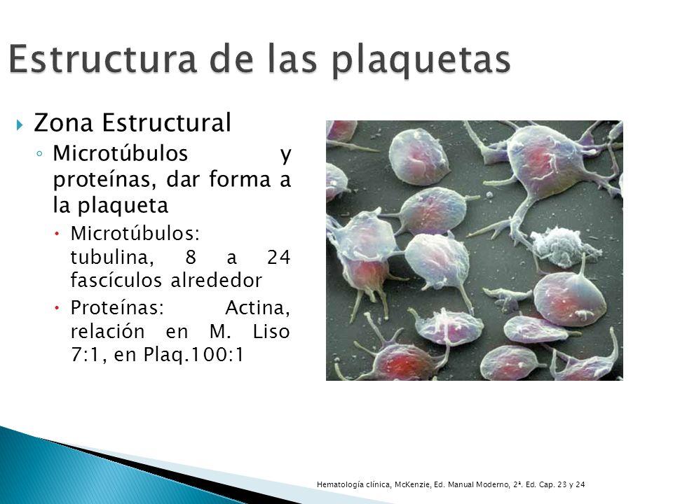 Estructura de las plaquetas Zona Estructural Microtúbulos y proteínas, dar forma a la plaqueta Microtúbulos: tubulina, 8 a 24 fascículos alrededor Pro