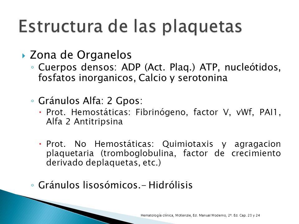 Zona de Organelos Cuerpos densos: ADP (Act. Plaq.) ATP, nucleótidos, fosfatos inorganicos, Calcio y serotonina Gránulos Alfa: 2 Gpos: Prot. Hemostátic