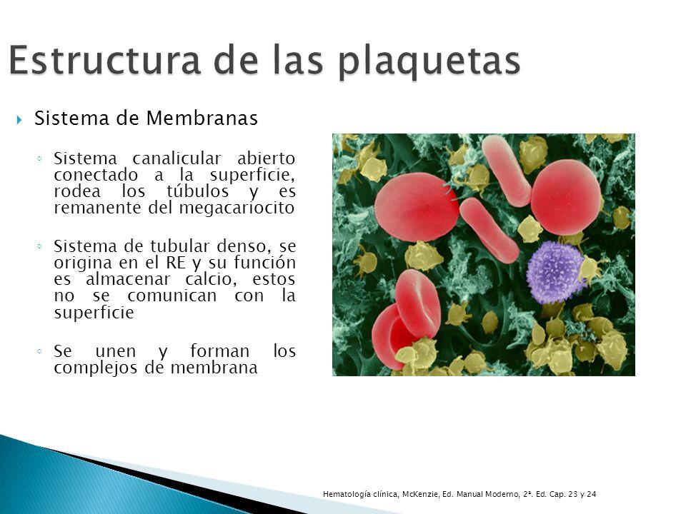 Estructura de las plaquetas Sistema de Membranas Sistema canalicular abierto conectado a la superficie, rodea los túbulos y es remanente del megacario