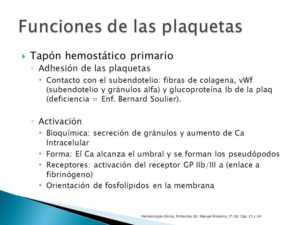 Tapón hemostático primario Adhesión de las plaquetas Contacto con el subendotelio: fibras de colagena, vWf (subendotelio y gránulos alfa) y glucoprote