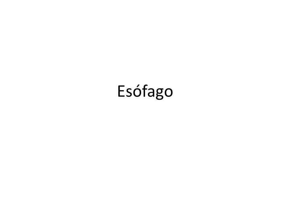 Esófago