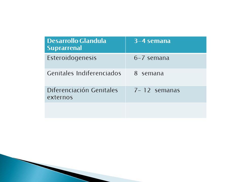 Desarrollo Glandula Suprarrenal 3-4 semana Esteroidogenesis 6-7 semana Genitales Indiferenciados 8 semana Diferenciación Genitales externos 7- 12 sema