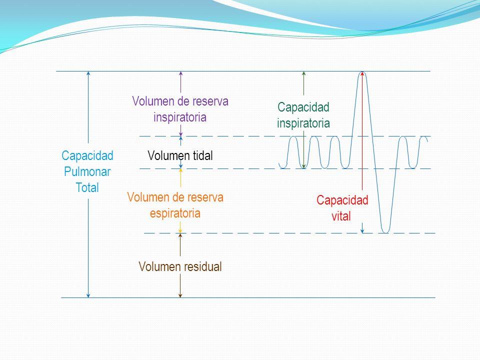 Capacidad Pulmonar Total Volumen tidal Volumen de reserva inspiratoria Volumen de reserva espiratoria Volumen residual Capacidad inspiratoria Capacida