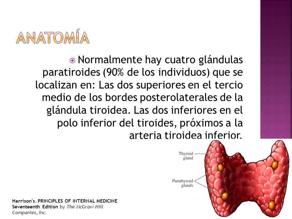 Normalmente hay cuatro glándulas paratiroides (90% de los individuos) que se localizan en: Las dos superiores en el tercio medio de los bordes postero
