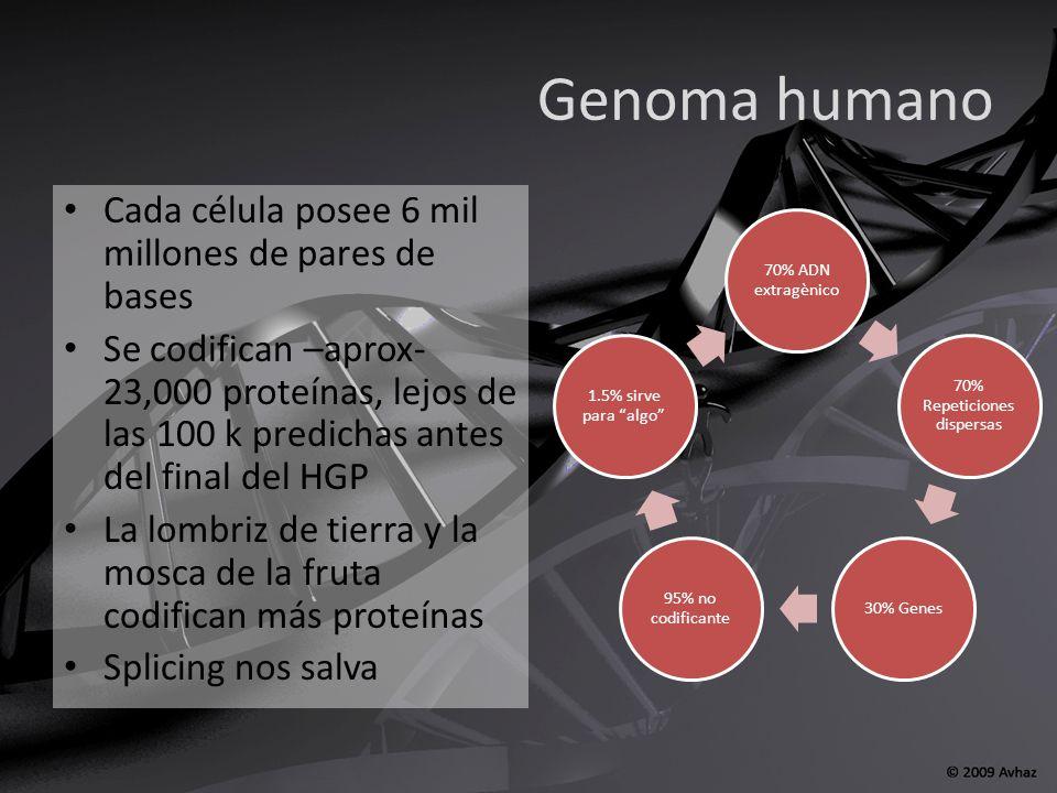 Humanos 30,000 genes Chimpancé 30,000 genes A.thaliana 25,000 genes Ratón 30,000 genes C.