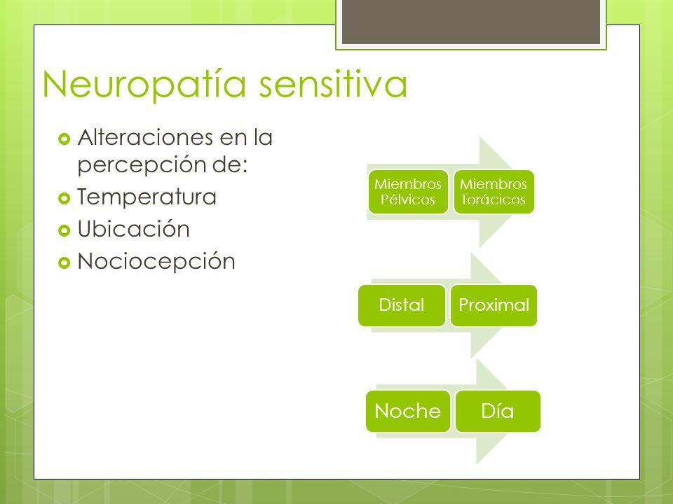 Neuropatía sensitiva Alteraciones en la percepción de: Temperatura Ubicación Nociocepción Miembros Pélvicos Miembros Torácicos DistalProximal NocheDía