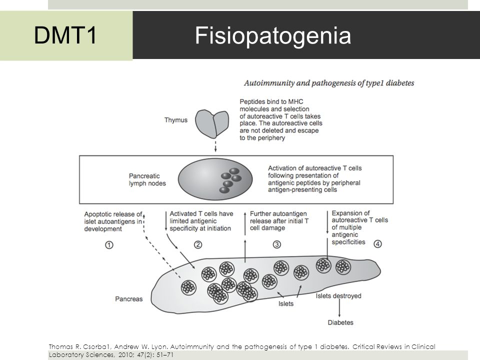Fisiopatogenia DMT1 Thomas R. Csorba1, Andrew W. Lyon. Autoimmunity and the pathogenesis of type 1 diabetes. Critical Reviews in Clinical Laboratory S